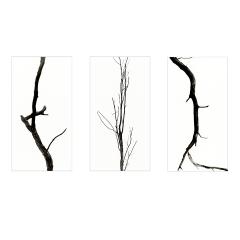 Baum_Triptychon-1200
