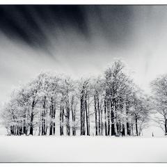 Schwarzwald3_1200