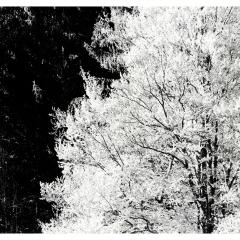 Schwarzwald_6